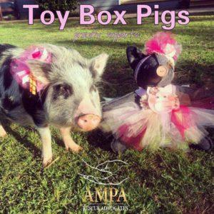 toy box pig bowtique